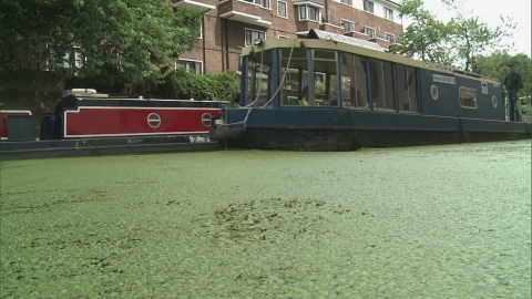 Duckweed from London's canals could be the new superfood