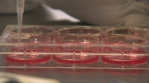 'Extraordinary' treatment could be cancer breakthrough